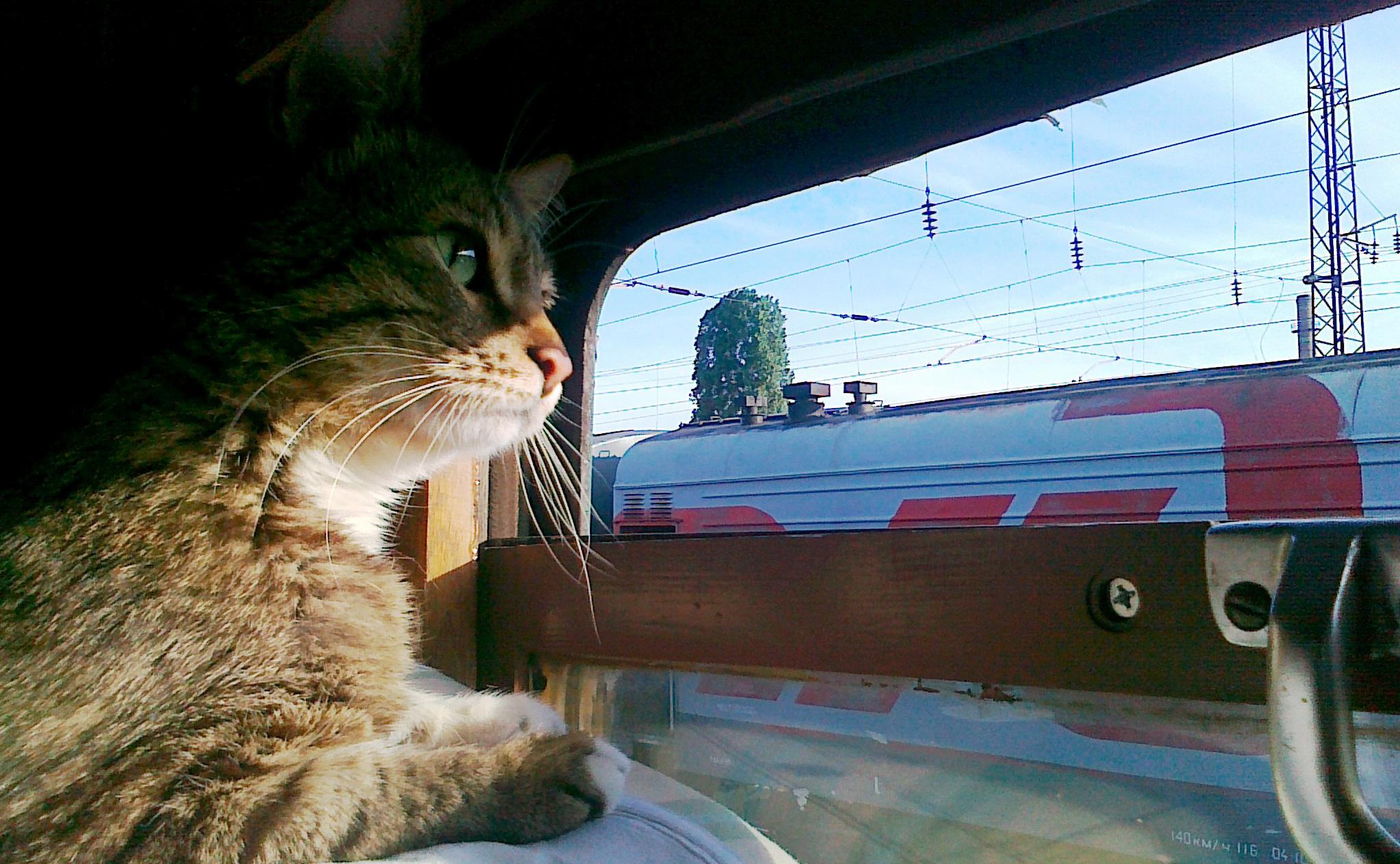 Юбилеем, картинки в поезде смешные